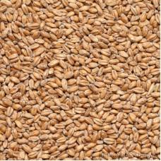 Солод Пшеничный Курск, 1 кг